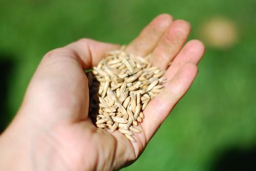 morton oats