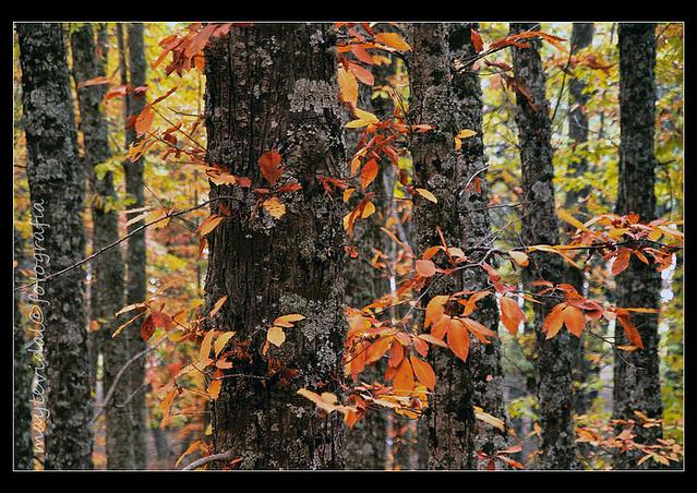Vestidos con el color del otoño