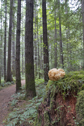 forest cauliflower