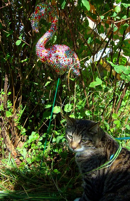 Wormy is unimpressed by kitschy flamingos