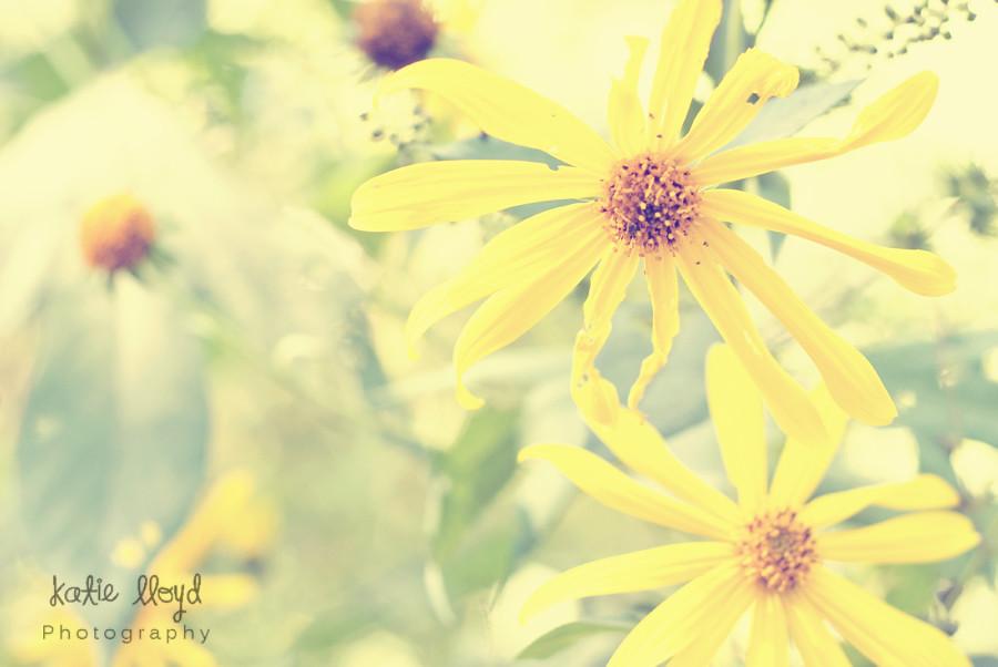 Yellow-garden