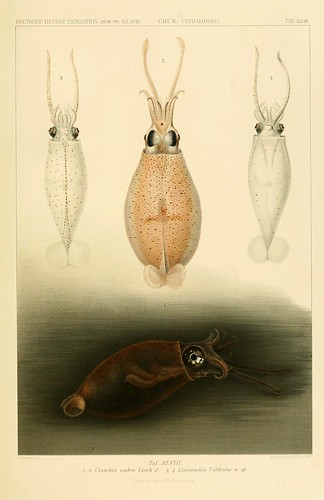 020-Die Cephalopoden 1910- Carl Chun