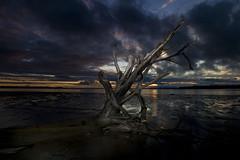 Washed Ashore (mark pierson) Tags: sunset sky beach alaska clouds river dark power mud dramatic driftwood drama kenai