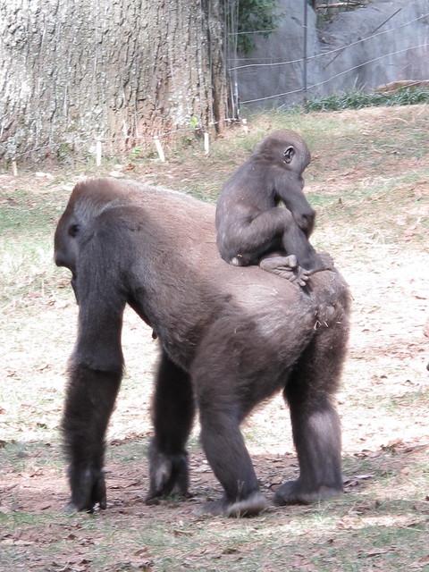 Zoo 0291