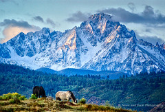 Dawn's First Light (Aspenbreeze) Tags: road horses horse snow mountains nature animal rural colorado dirtroad peaks blackhorse ridgway equine wow1 wow2 mountainous roanhorse aspenbreeze sniffelsrange