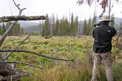 Jim Shooting moose with his trusty Nikon D700