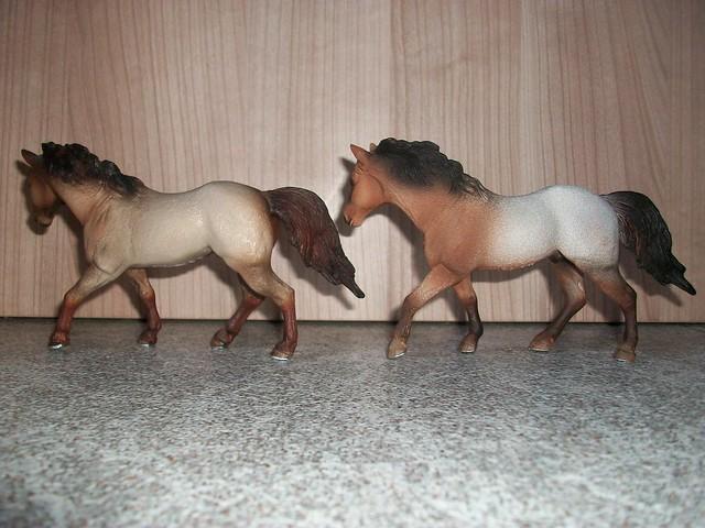 New arrivals in my herd! 6171880784_4abbd8c35c_z