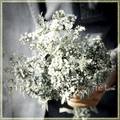 Veg - Fresh Oregano Bouquet