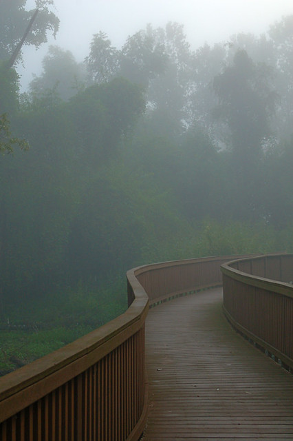 Columbia Bottom Conservation Area, in Saint Louis County, Missouri, USA - turtle boardwalk in fog