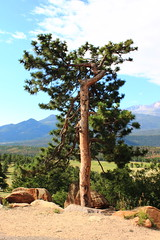 Unusual Tree - Rocky Mountain National Park (danjdavis) Tags: mountains tree colorado rockymountains rockymountainnationalpark unusualtree