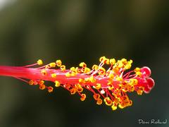 Princesse (Domi Rolland ) Tags: nature fleur canon de europe italia lumière lac come bonheur italie douceur g9