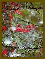 The Web (clickclique) Tags: wet face fog spider droplets web spiderman colorphotoaward natureiswonderful