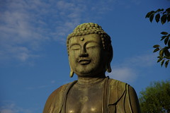 Common Sense Buddhism: A Compelling Life Philosophy for Everyone