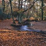 Autumn-Forest-M7