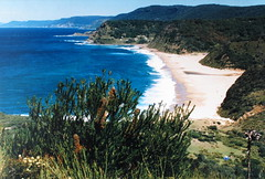 Looking back down the coast to Era Royal National Park NSW (spelio) Tags: old print album ace favorites historic nsw favourites 1980s favs copy copies c41 rescan bushwalks