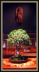 Zensational (nanaofhuck) Tags: museum wallart bonsai bigfav abigfave beartiful qualitypixels nanaofhuck beautifulphotosbymsjudi amaxingtrees