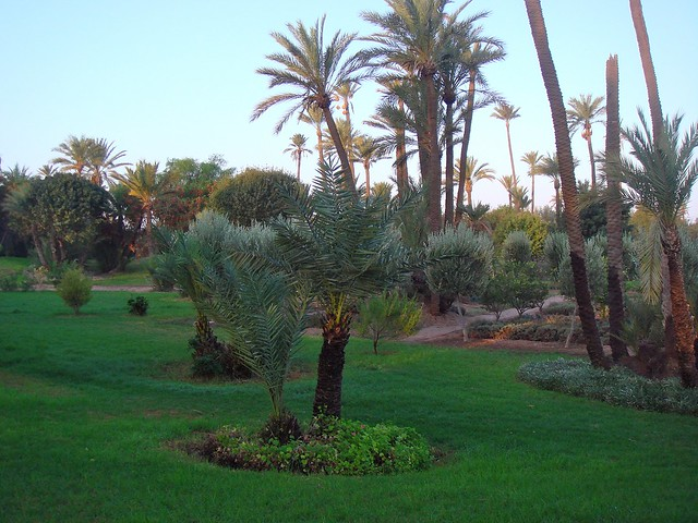 Life in Marrakech