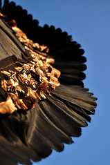 (Decrepit Telephone) Tags: old sky vintage dof embroidery antique victorian silk sunshade parasol embroidered heh 1870s iknowthingshavebeenratherparasolheavyhereasoflate butthatsbecauseivenotgotalotelsetoshoothere otherthanthebreezeandimsureyallwouldgetreallytiredofthatafterawhile