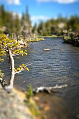 Loch Lake Again (Julie Rideout) Tags: lake water rockymountainnationalpark tiltshift theloch lochlake nikond7000 julierideout