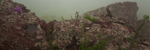 Birdie on the Rock
