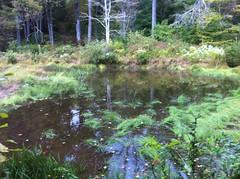 Edmonson Pond