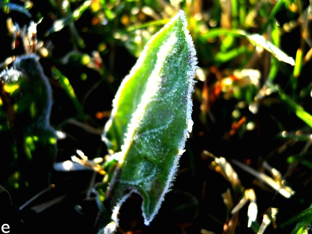 Morning Frost 3