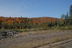DSD_7689 (Greying_Geezer) Tags: autumn ontario canada fall colors colours scenic trains autumncolours railways railroads saultstemarie on algoma agawacanyon traintour