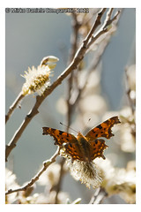"Beginning of spring <a style=""margin-left:10px; font-size:0.8em;"" href=""http://www.flickr.com/photos/66444177@N04/6203770807/"" target=""_blank"">@flickr</a>"