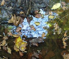 Leaves in the water Photo