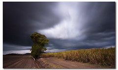 60 seconds under the storm (danishpm) Tags: longexposure storm cane clouds canon australia wideangle nsw fields aussie aus 1020mm lonetree sugarcane murwillumbah sigmalens eos450d 450d bigstopper sorenmartensen tweedarea hitechgradfilters 09ndsoftgrad