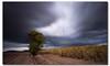 60 seconds under the storm (danishpm) Tags: longexposure storm cane clouds canon australia wideangle nsw fields aussie aus 1020mm lonetree sugarcane murwillumbah sigmalens eos450d 450d bigstopper sorenmartensen tweedarea hitechgradfilters 09ndsoftgrad