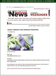 """Deadly 'Amazon' Plant Removed From Park"" - Southwark News @ 29 September 2011 (Web Page) (Kam.Hong Leung) Tags: park blue summer plant flower green london nature ecology fauna garden insect fly newspaper leaf flora community purple wildlife cluster seed conservation monk petal lilac stamen council mauve hood bermondsey environment medicine leisure bud pollen poison root press botany wildflower biology horticulture rotherhithe herb southwark hoverfly monkshood biodiversity councillor toxin se16 surreydocks londonpark southwarkpark stamina aconitum pollinator southwarkcouncil southwarknews rcsf rotherhithecommunitysafetyforum kamhongleung leungkamhong adasalter friendsofsouthwarkpark lynneolding adasaltergarden barriehargrove"