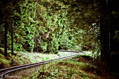 Der Weg durch den Wald (JoyceHemmingway) Tags: gras grn bahn wald fichte tanne schiene