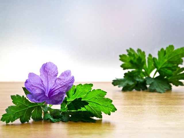 IMG_1208 Artemisia Argyi and a purple flower,艾草和紫色的花