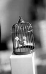 white black bird film birdcage 35mm toy 50mm freedom thing cage swing caged perch fujica oiseau jouet petit jessops jessopspan400s pan400 stx1n