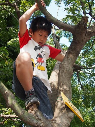 おだてなくても木に登る