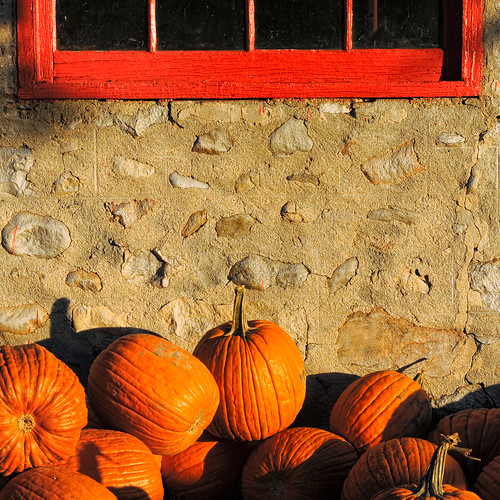 Pumpkins Against Wall (1x1) by Davey S