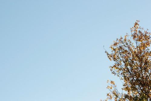autumn temps will come
