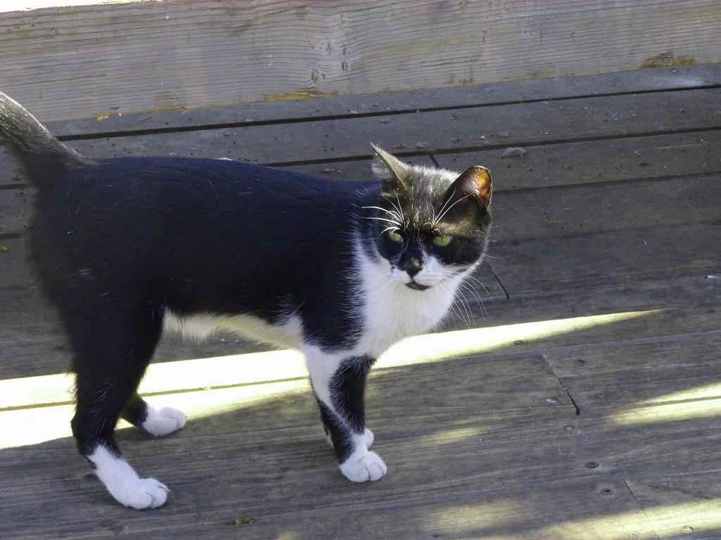 13-10-2011-ms.cat