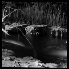Half Way Across (Mike Oddhayward) Tags: park reflection water reeds ir stones lilies stepping infrared preston sl66 rodinal rockery homedev homescan efke820