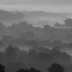 Misty Landscape (parallax.) Tags: morning trees bw misty fog landscape dawn foggy layers guildford chantrywood