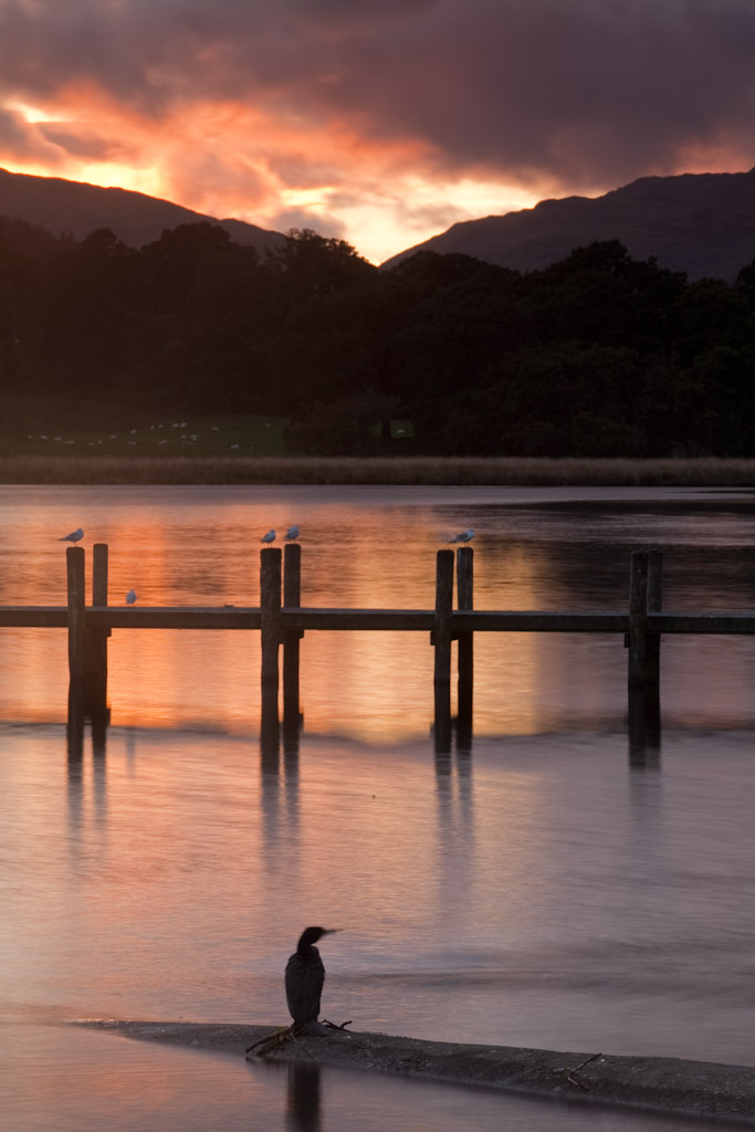 A solitary bird watching the sunset at Ambleside