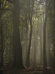 Magical mist (yvonnepay615) Tags: wood uk trees nature woodland lumix norfolk panasonic g1 rays 45mm eastanglia lynford musictomyeyeslevel1 masterclasselite