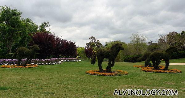 Horse-shaped shrubs