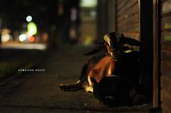 [294/365] Homeless Goats (Dodzki) Tags: nikon october 2011 cebusugbo d5000