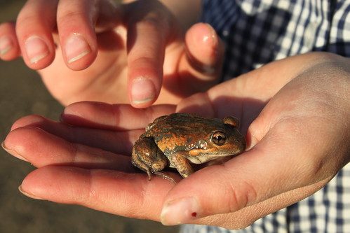 Ellamay touching frog