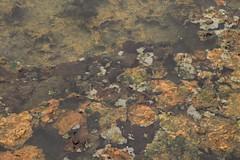 Volcanoes of Southern Kamchatka Russia Far East (eriagn) Tags: khodutka kamchatkakamskatsky kamchatka hotspring algae volcano thermal russiafareast wilderness sinter ngairelawson asia russia pacificringoffire eriagn canon eos kamchatkakrai