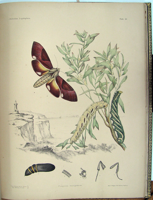 butterfly lithography