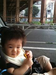 お散歩とらちゃん(2011/9/19)