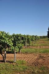 Vignes à Fléac (Loic Marnat) Tags: nikon paysage vignes landsacape travelguide visittheworld d300s fléac